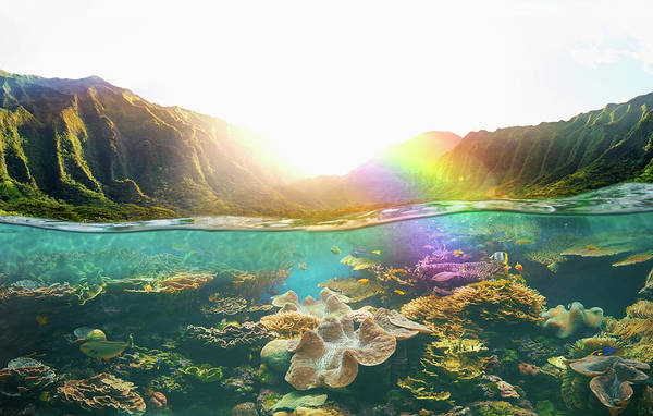 Underwater Scene Photograph - Tropical Reef Under Rural Cliffs by Colin Anderson Productions Pty Ltd
