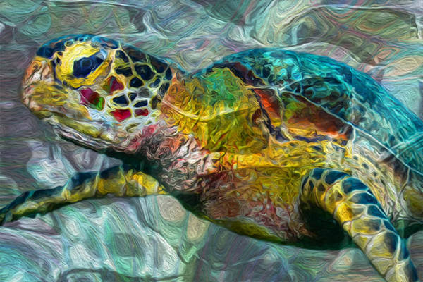 Scuba Diving Wall Art - Painting - Tropical Sea Turtle by Jack Zulli