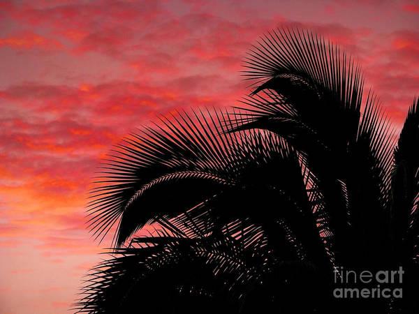 Photograph - Tropical Silhouette by Ellen Cotton