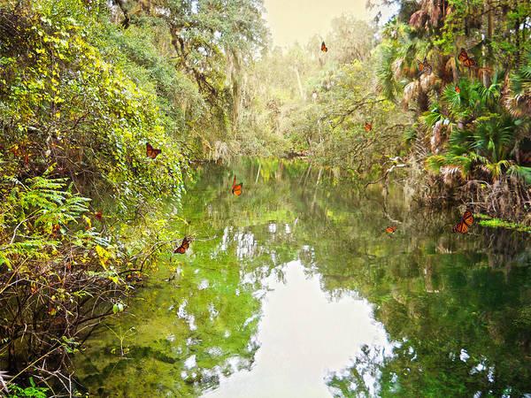 Photograph - Tropical Treasure by Judy Hall-Folde