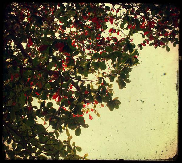 Photograph - Tropical Tree by Georgia Fowler