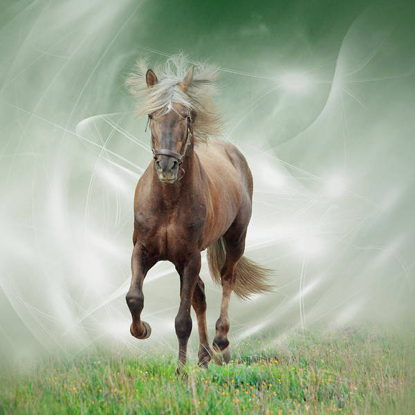 Andalusian Wall Art - Photograph - Trotting Andalusian Horse by Christiana Stawski