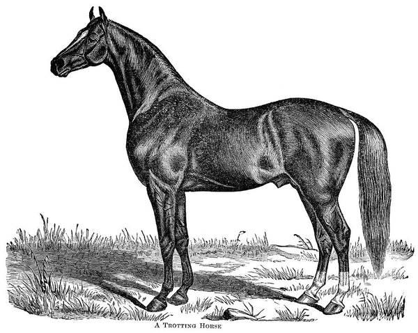 Digital Art - Trotting Horse Engraving by Nnehring