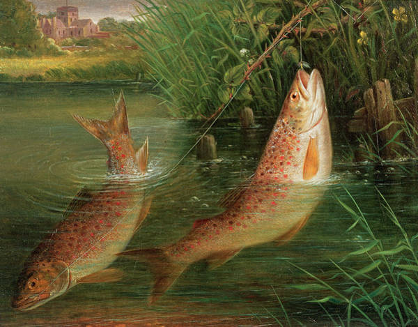 Fishing Line Photograph - Trout At Winchester by Valentine Thomas Garland