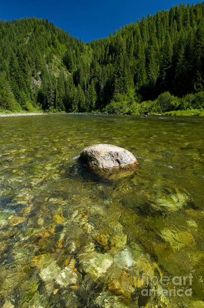 Trout Stream Photograph - Trout Stream, Kelly Creek by William H. Mullins