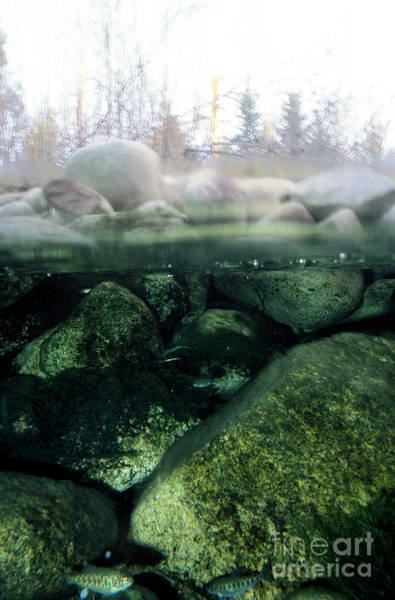 Above And Below Wall Art - Photograph - Trout Stream by William H. Mullins