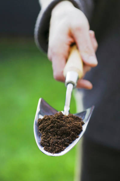 Trowel Photograph - Trowel With Potting Compost by Gustoimages/science Photo Library