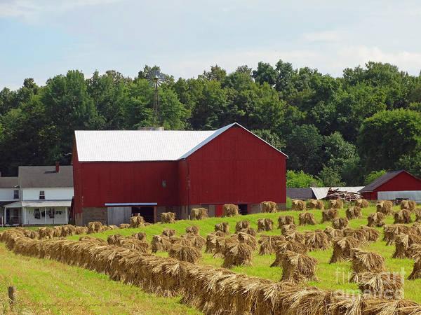 True Amish Farm Art Print