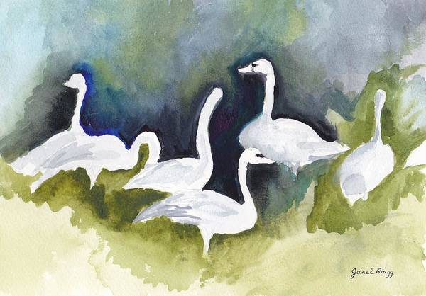 Skagit Valley Painting - Trumpeter Swans In Skagit County by Janel Bragg