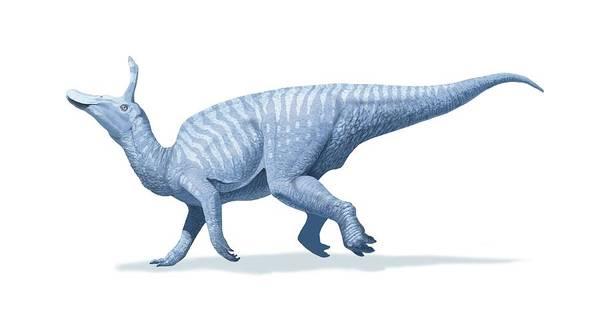 Wall Art - Photograph - Tsintaosaurus by Jaime Chirinos/science Photo Library