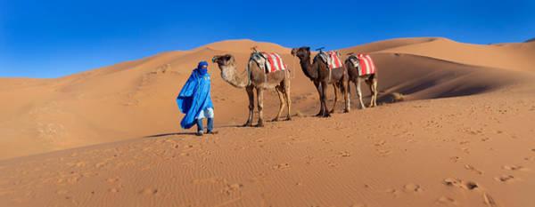 Berber Wall Art - Photograph - Tuareg Man Leading Camel Train by Panoramic Images