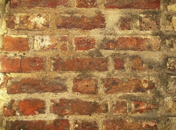 Tudor Photograph - Tudor Brickwork by Cordelia Molloy
