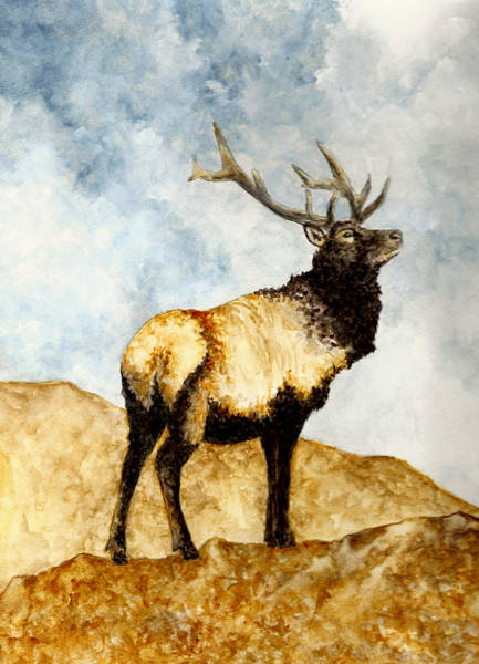 Wall Art - Painting - Tule Elk by Michael Vigliotti
