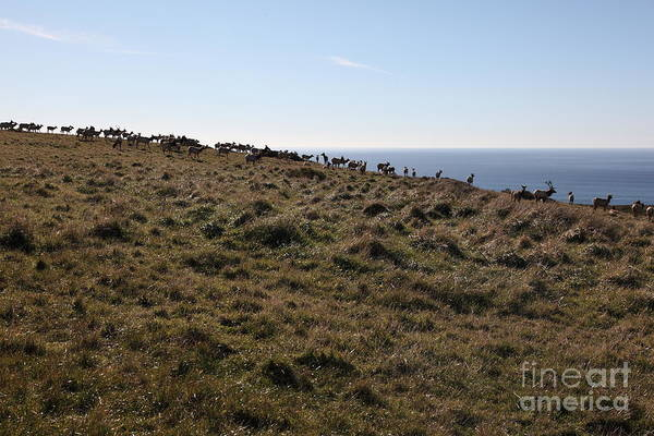 Photograph - Tules Elks Of Tomales Bay California - 5d21276 by Wingsdomain Art and Photography