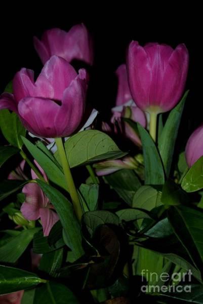 Photograph - Tulip 2 by Rachael Shaw