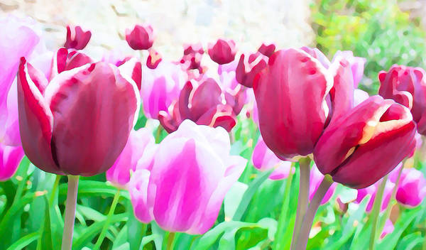 Growing Up Digital Art - Tulip Delight by Semmick Photo