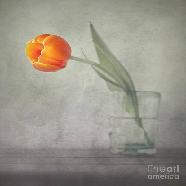 Photograph - Tulip by Elena Nosyreva