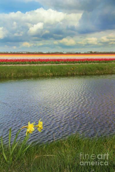 Dutch Tulip Photograph - Tulip Fields 4 by Jasna Buncic