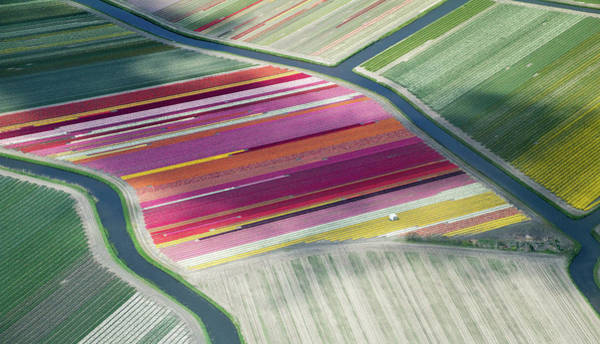 Holland Wall Art - Photograph - Tulip Fields, Aerial View, South by Frans Sellies