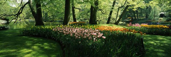 Keukenhof Wall Art - Photograph - Tulip Flowers And Trees In Keukenhof by Panoramic Images