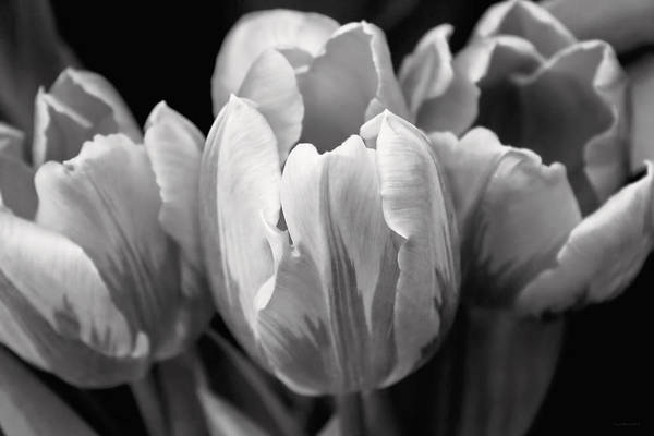 Jennie Photograph - Tulip Flowers Black And White by Jennie Marie Schell