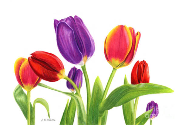 Wall Art - Painting - Tulip Garden On White by Sarah Batalka
