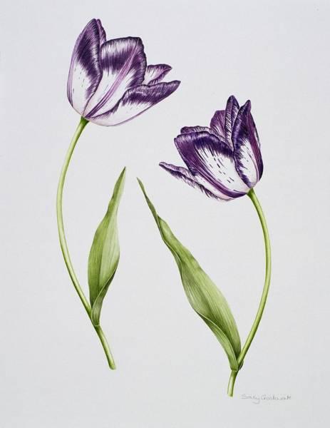 Violet Painting - Tulip Habit De Noce by Sally Crosthwaite