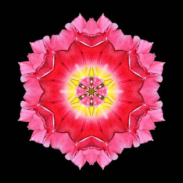 Photograph - Tulip Peach Blossom I Flower Mandala by David J Bookbinder