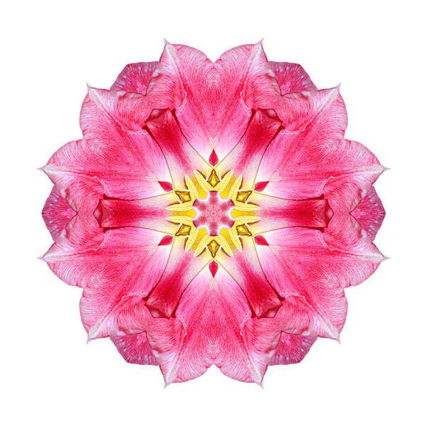 Photograph - Tulip Peach Blossom IIi Flower Mandala White by David J Bookbinder