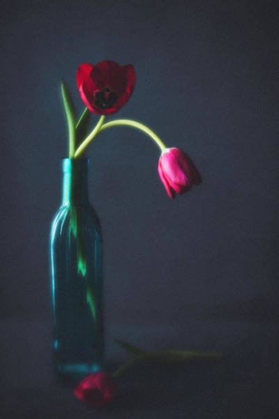 Vase Of Flowers Photograph - Tulip Still Life For Mothers Day by Catlane