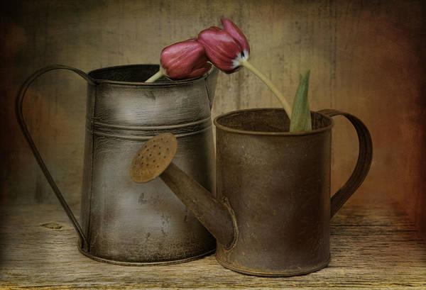 Tulip Tales Art Print