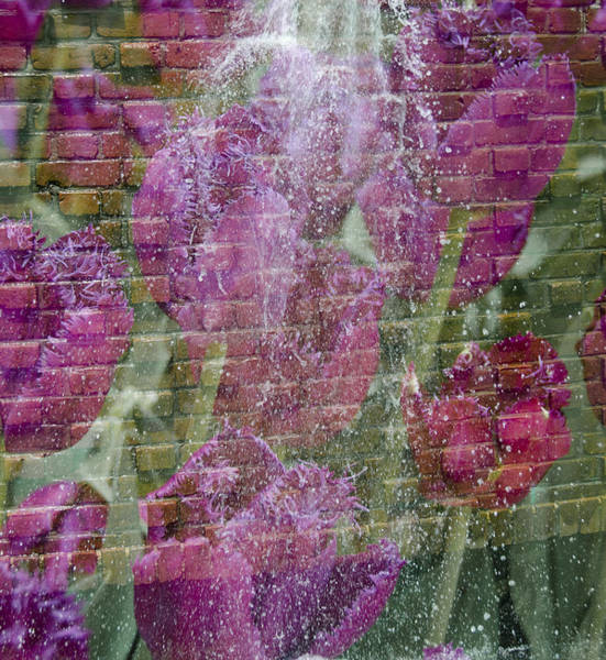 Photograph - Tulip Waterfalls by Penny Lisowski