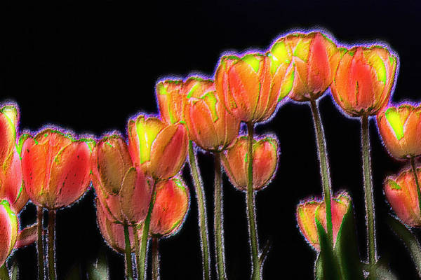 Photograph - Tulips by Alexander Fedin