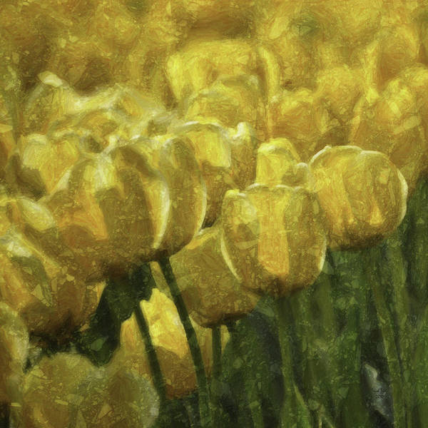 Photograph - Tulips All Over by Trish Tritz
