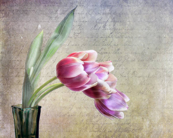 Cursive Photograph - Tulips And A Love Letter by David and Carol Kelly
