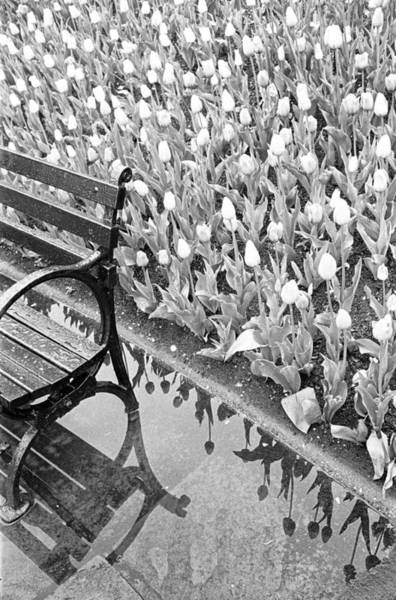 Photograph - Tulips And Bench I by Dave Beckerman
