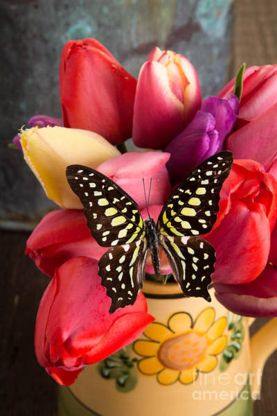 Flores Photograph - Tulips And Butterflies by Edward Fielding