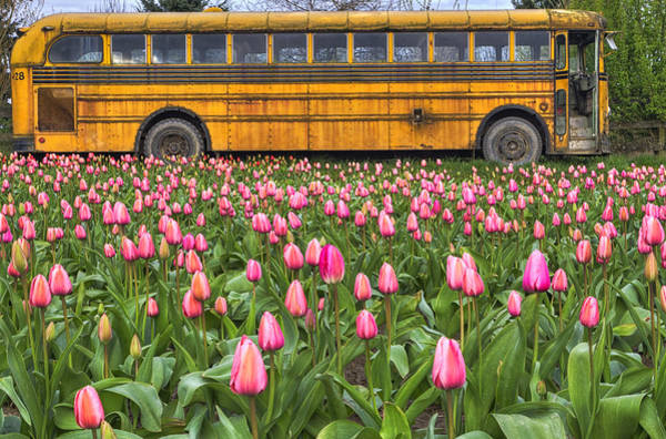 Photograph - Tulips And Old Bus by Mark Kiver