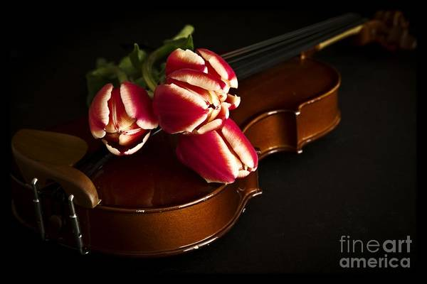 Photograph - Tulips And Violin by Edward Fielding