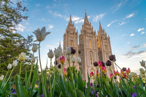 Art Print featuring the photograph Tulips At The Temple by Dustin  LeFevre