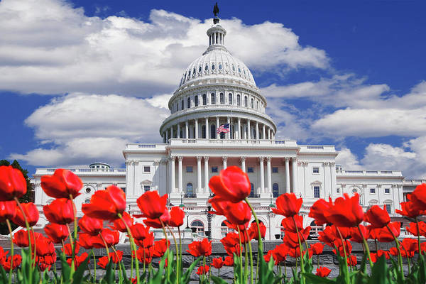 Wall Art - Photograph - Tulips Bloom In Front Of The Capitol by Jaynes Gallery