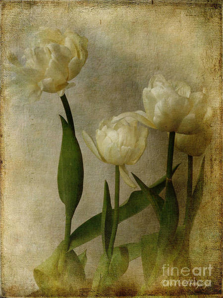 Photograph - Tulips by Chris Armytage