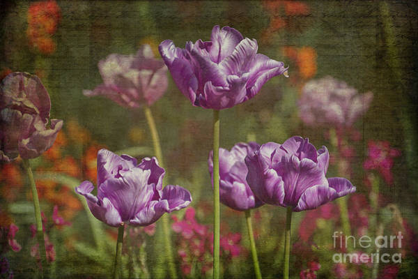 Photograph - Tulips by Clare Bambers