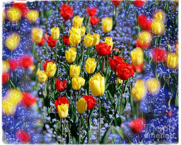 Photograph - Tulips by Edmund Nagele