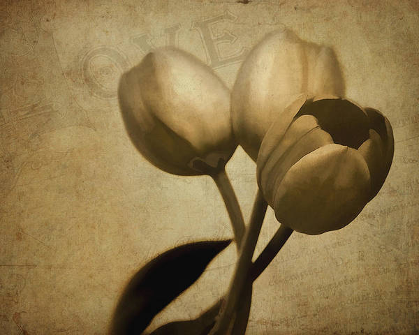Cursive Photograph - Tulips In Bronze by David and Carol Kelly
