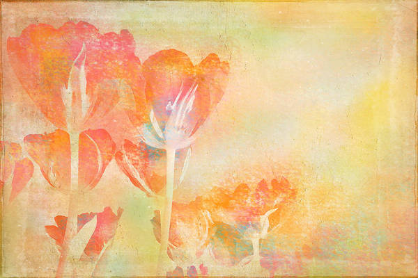 Photograph - Tulips In Spring by Peggy Collins