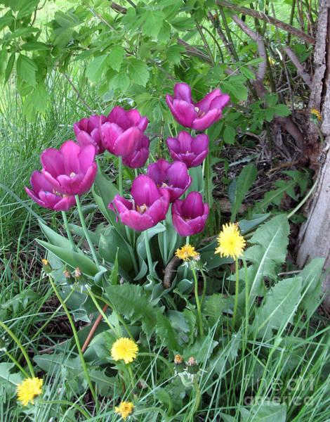 Tulips In Summer Art Print