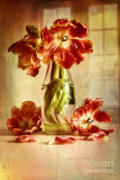 Photograph - Tulips In Vintage Milk Bottle  by Sandra Cunningham