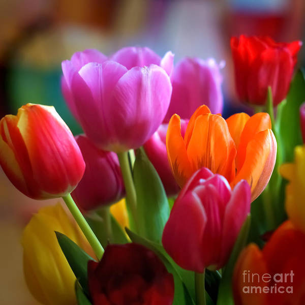 Tulips Light Art Print