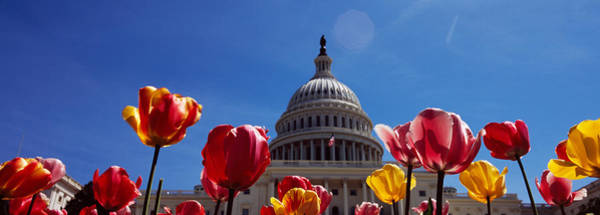 Colonnade Photograph - Tulips With A Government Building by Panoramic Images